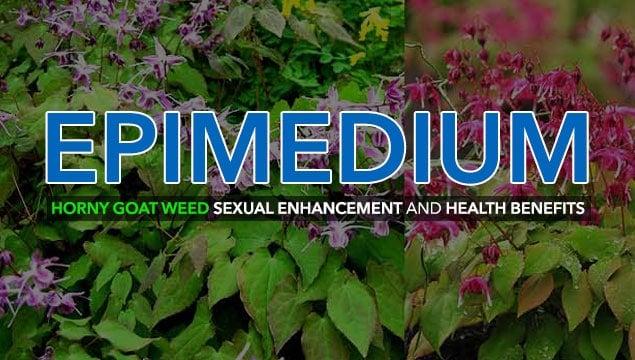 Horny Goat Weed (Epimedium) Aphrodisiac Potency and Sexual Health Benefits