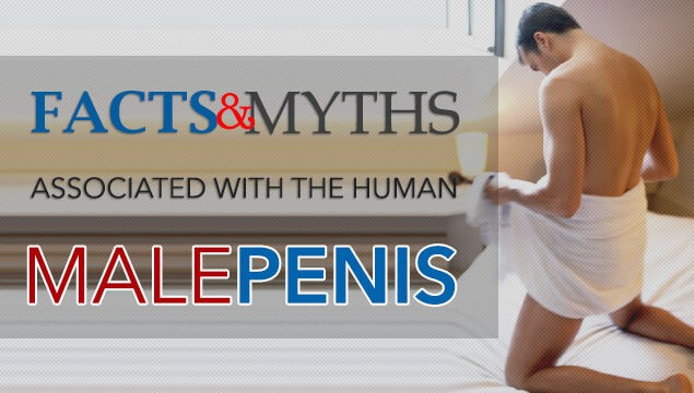 Penis Information - Penis Size Myths And Facts