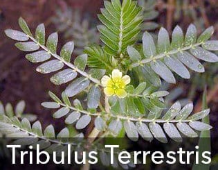ProSolution Plus with Tribulus Terrestris